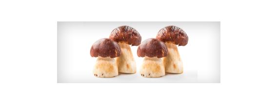 Food based on plants and fungi