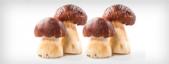 Alimentação a partir de plantas e fungos