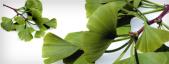 Plantas para la cinetosis