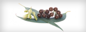 Expectorant and mucolytic herbs