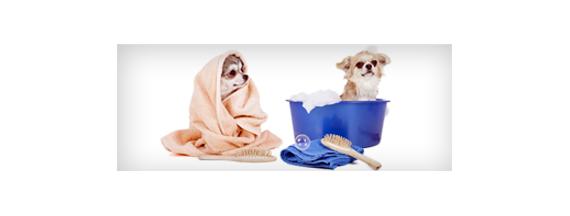 Tierhygiene