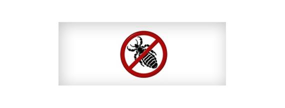Pediculicidas o antipiojos